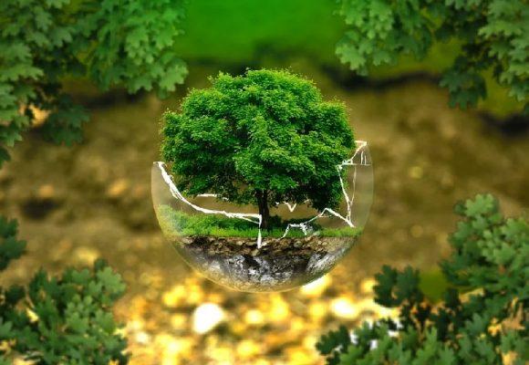 Por la protección de la naturaleza y el fin del especismo
