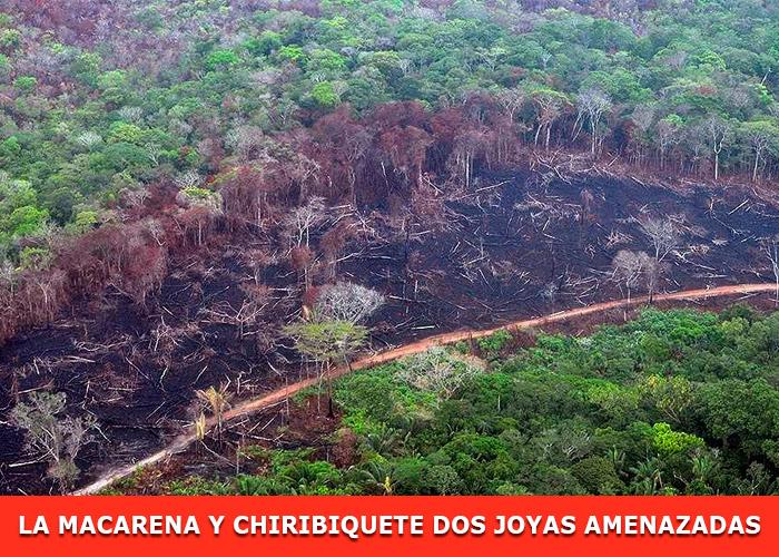 La deforestación de los parques: de la mano del Acuerdo de Paz con las FARC