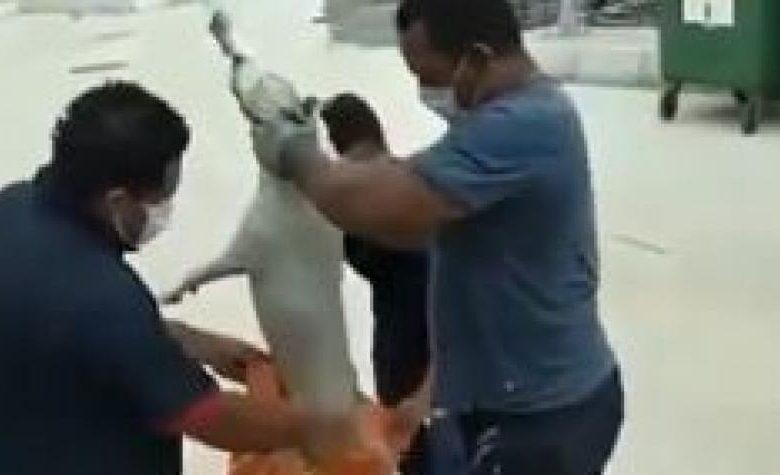 ¡Malditos!: En el Sena están ahogando perros hasta matarlos
