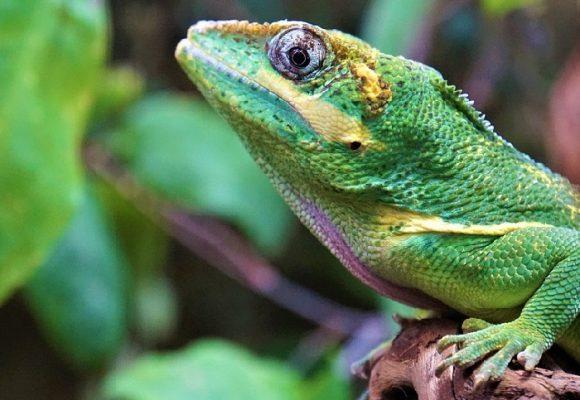 Restricciones de la ley a la investigación científica en biodiversidad