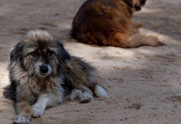 ¿Qué contiene la nueva ley de protección a los animales abandonados?