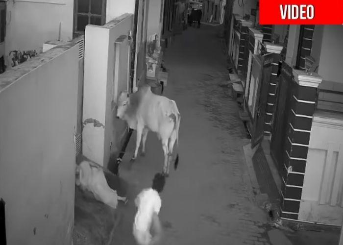 El niño valiente que se le enfrentó a un toro para salvar a su abuelita