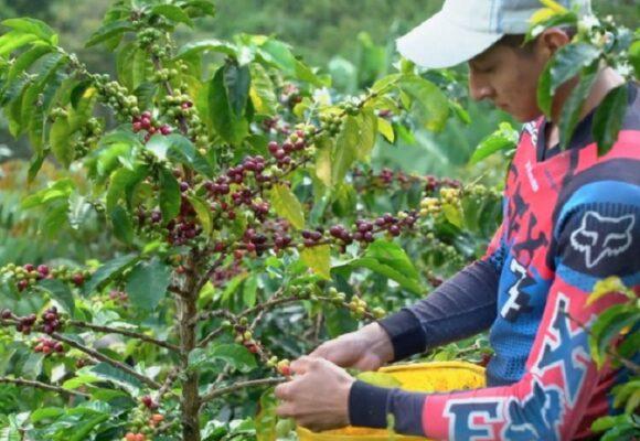 El café como apuesta de construcción de paz