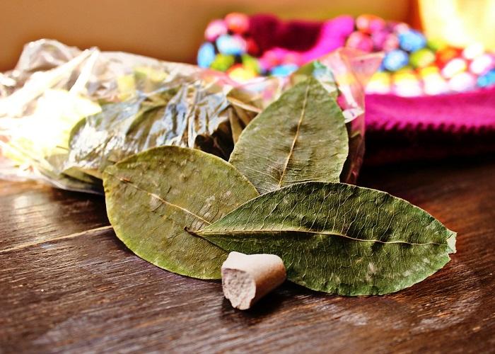 La coca puede ser la salvación de Colombia