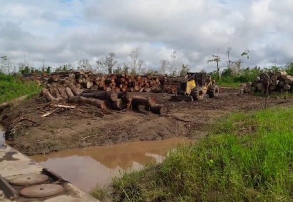 El acuerdo para frenar la deforestación en Colombia