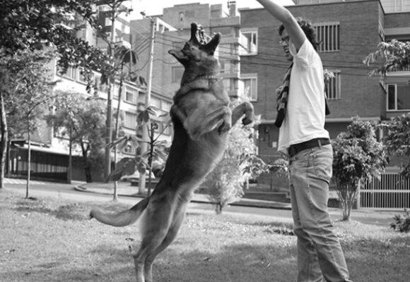 Historia de un perro y su nombre, Boban