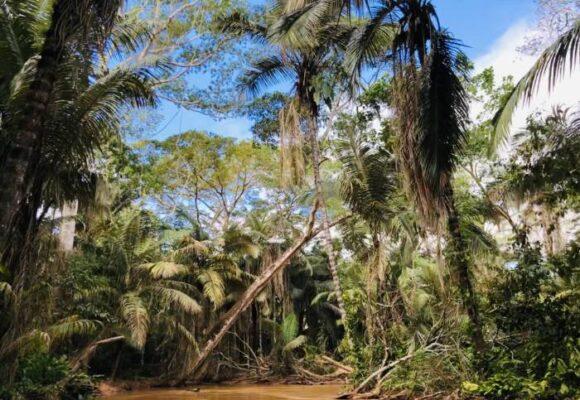 Retos para los bosques amazónicos en el 2021