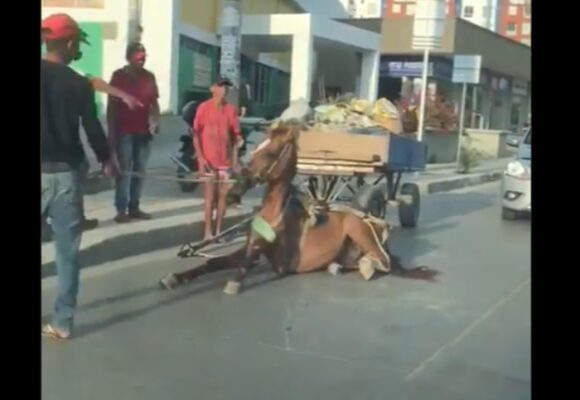 VIDEO: Colombia, el país donde todavía se tortura a los caballos