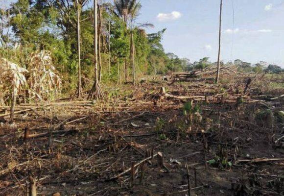 Las Farc están acabando con los parques naturales en el Meta