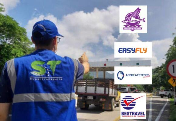 EasyFly, Velotax y dos más, señaladas de maltratar mascotas en los viajes