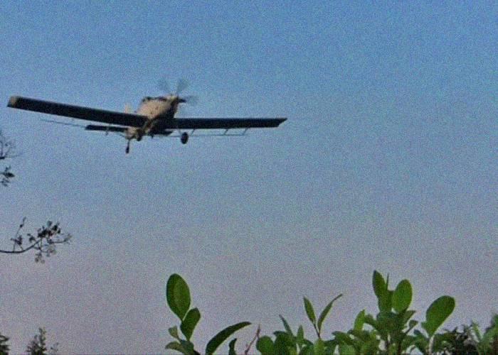 Gobierno espera iniciar aspersión aérea con glifosato en abril