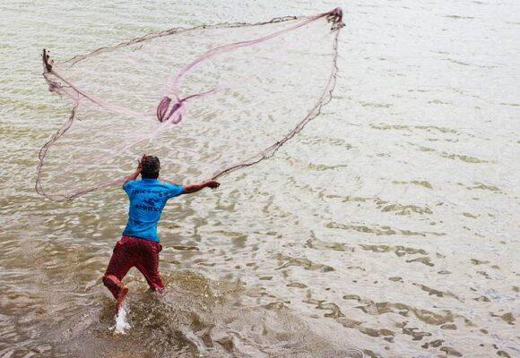La prohibición de pesca de tiburón, rayas y quimeras no es la solución