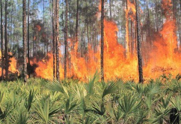 Deforestación de la selva, un suicidio masivo