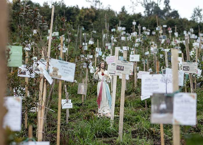 Un camposanto único donde de las cenizas del covid crecen árboles