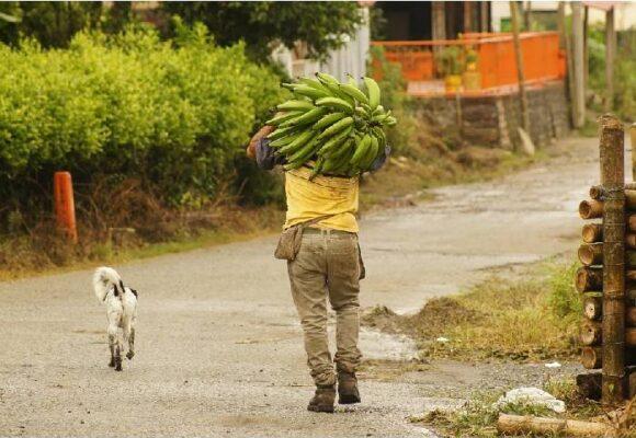 Luto en el movimiento agrario del Quindío