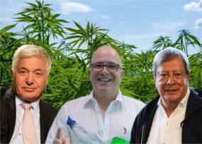 Mario Hernández, C. Daes y Bessudo le apuestan a la marihuana recreativa