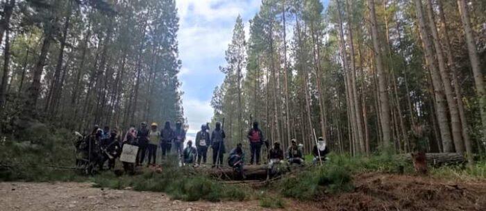 La pelea de los indígenas del Cauca contra la multinacional Cartón Colombia  - Las2orillas