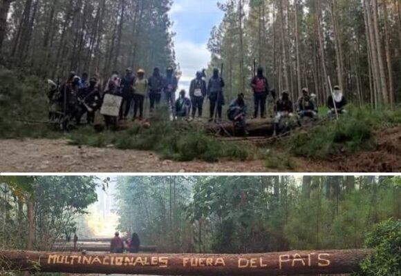 La pelea de los indígenas del Cauca contra la multinacional Cartón Colombia