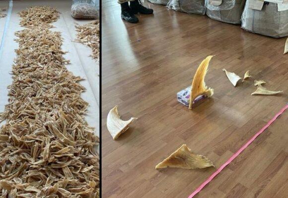 Decomisan en el Dorado 3493 aletas de tiburón que iban para Hong Kong
