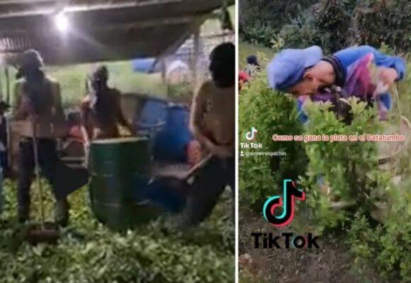 Tik Tok muestra la realidad oculta de los cultivos de coca en el Catatumbo