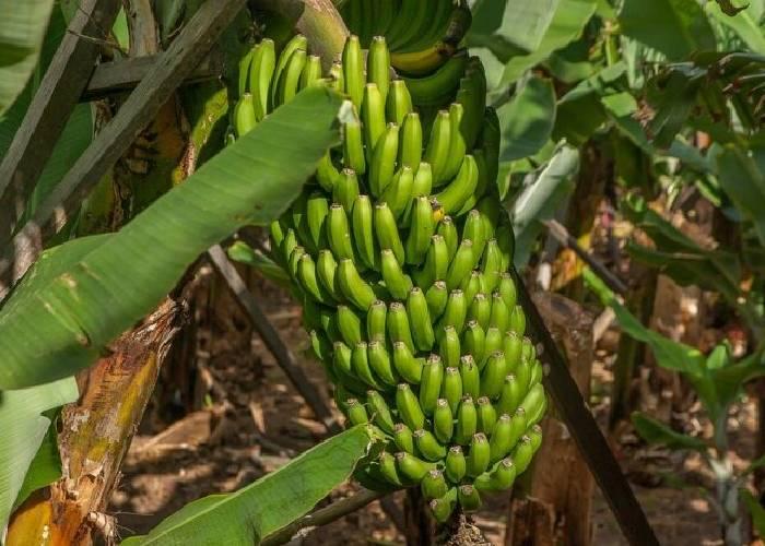 Usted decide: ¿país más feliz o república banana?