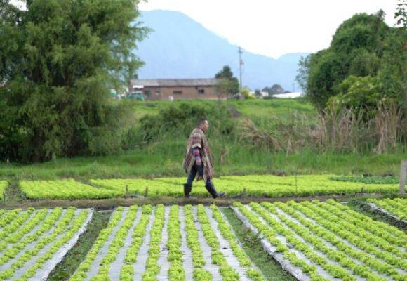 Nuevos planes para el sector agrícola