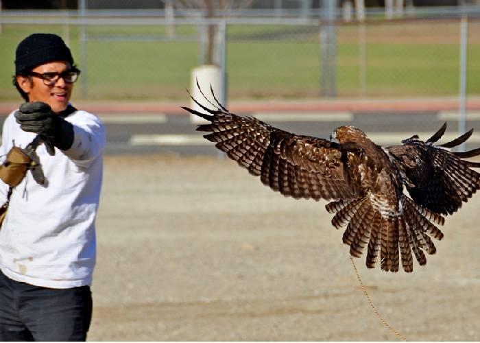 A vuelo de halcón