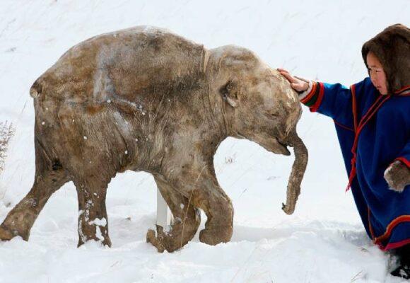 La resurrección del mamut y el cambio climático