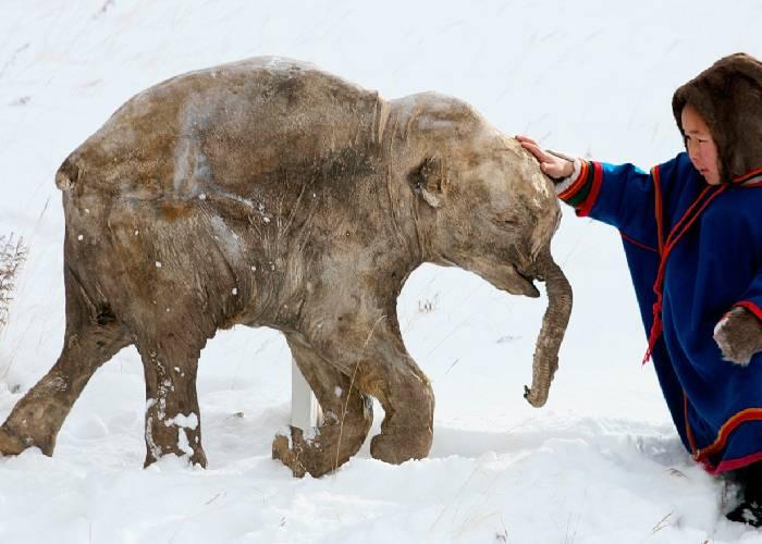 El proyecto que busca resucitar mamuts y el cambio climático