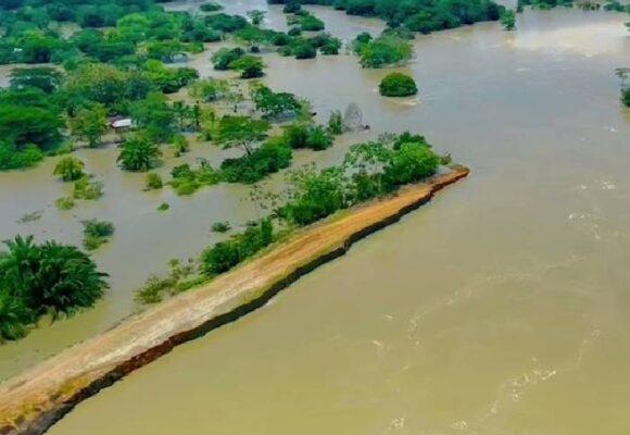 En riesgo la reforestación en La Mojana, Sucre