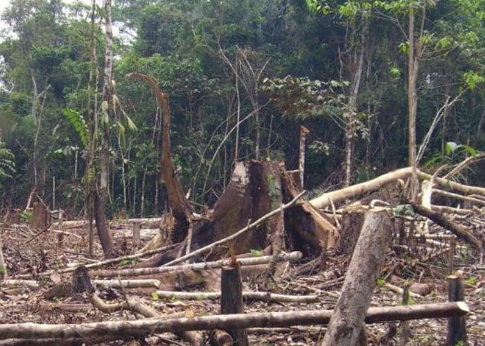 La vida no comenzó en la Amazonia pero puede terminar allí