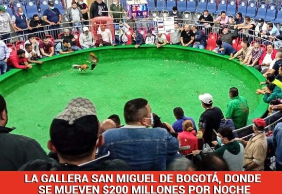 San Miguel, el último templo de las peleas de gallos en Bogotá