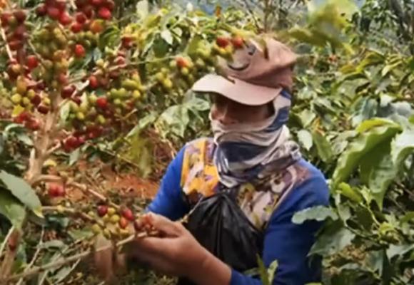En video: ¿Cómo Suiza logra ganar más dinero con el café colombiano?