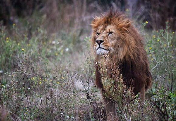 ¿Dónde están los leones políticos de Colombia?
