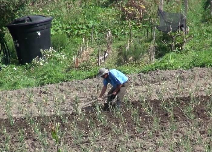 ¡La nueva despensa agrícola de Bogotá!, el plan para reactivar la economía campesina