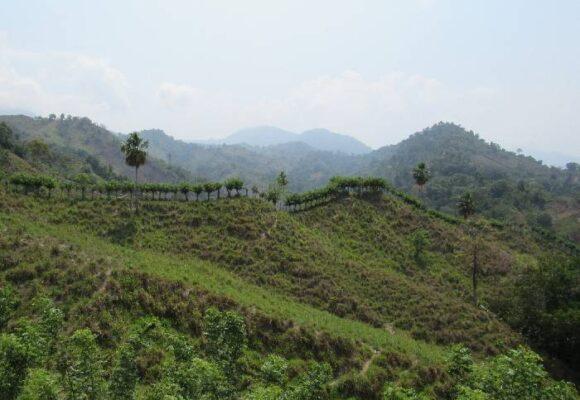 Comunidades indígenas, más afectadas que antes por cultivos ilícitos