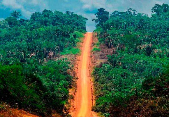 Las rutas ilegales que están dejando sin árboles a la Amazonía