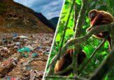 Las toneladas de basura que amenazan el Bosque de Yotoco, en el Valle