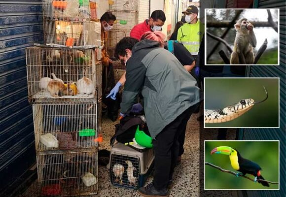 Micos, tucanes y culebras: la venta clandestina de animales en Bogotá